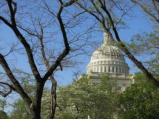 TALL DC Capitol Tree
