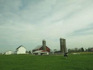 TALL MD Farm