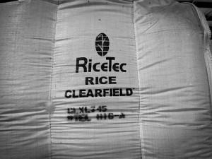 TALL HOU Rice
