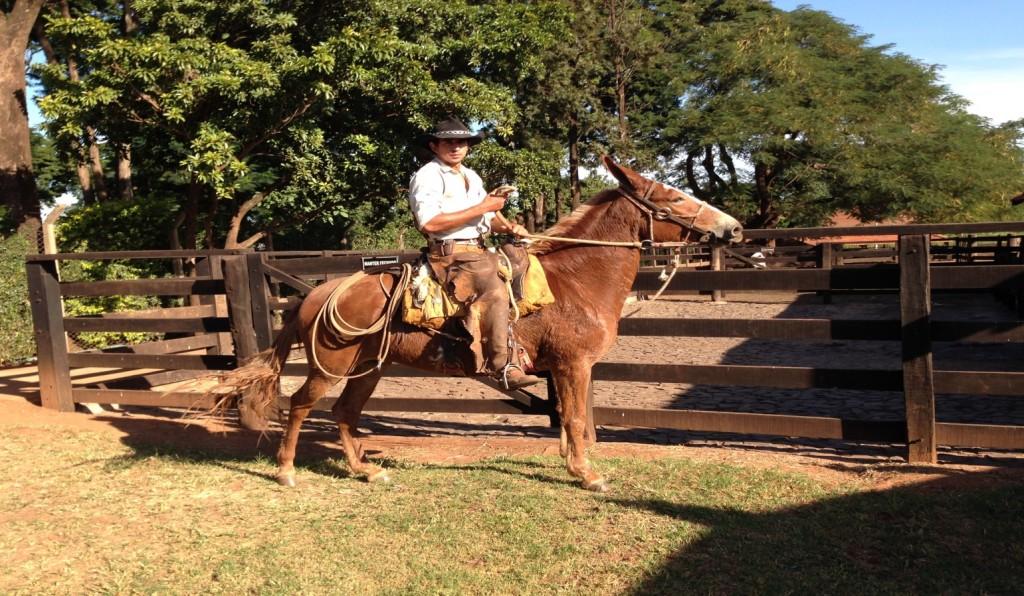 Brazilian Cowboy on Horse