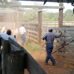 Working Cowboys on Ranch