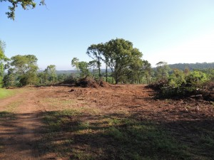 Land Clearing in Texas
