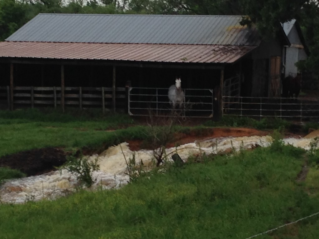 Lefty in the barn